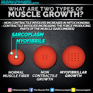 types-of-hypertrophy