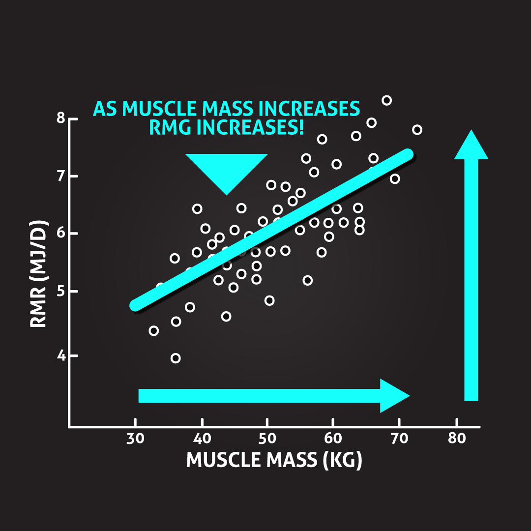 as-muscle-mass-increases-rmg-increases