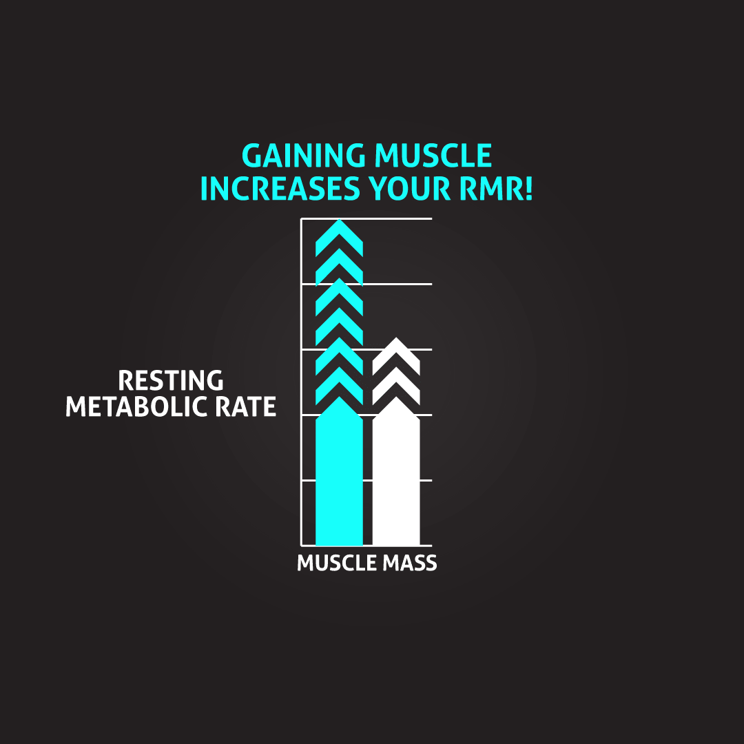 gaining-muscle-increases-rmr
