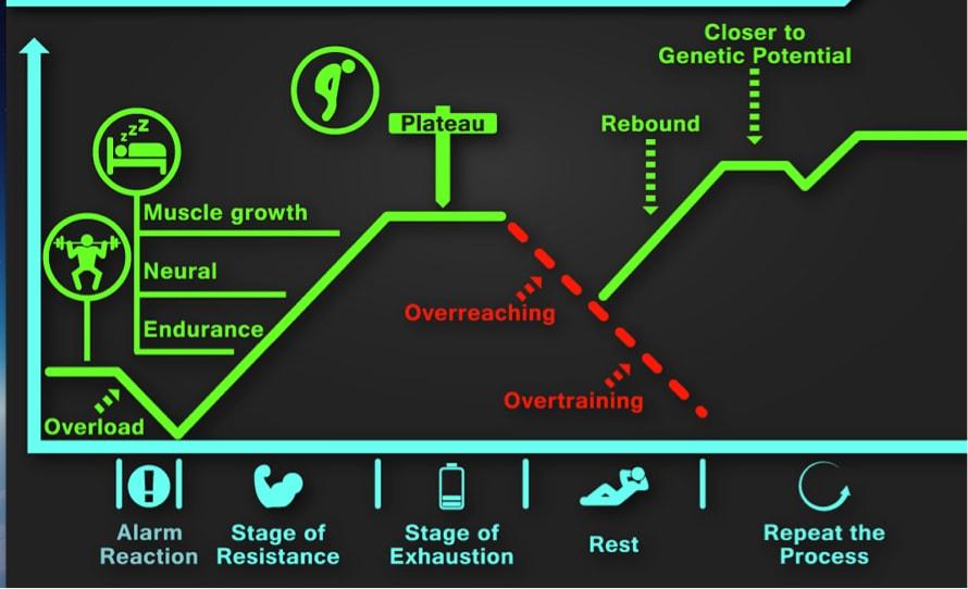 muscle-grow-overreaching-chart
