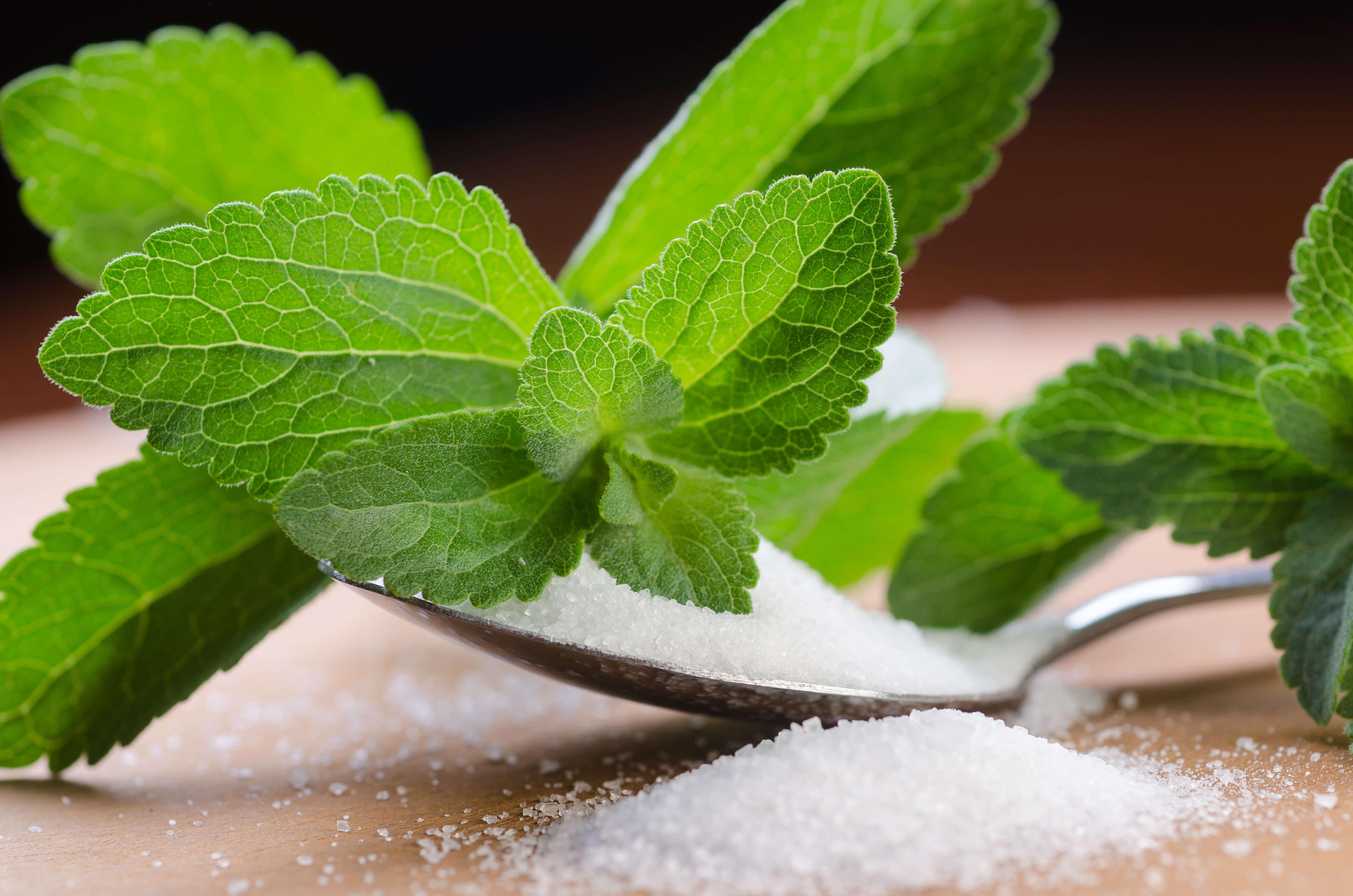 stevia-leaf