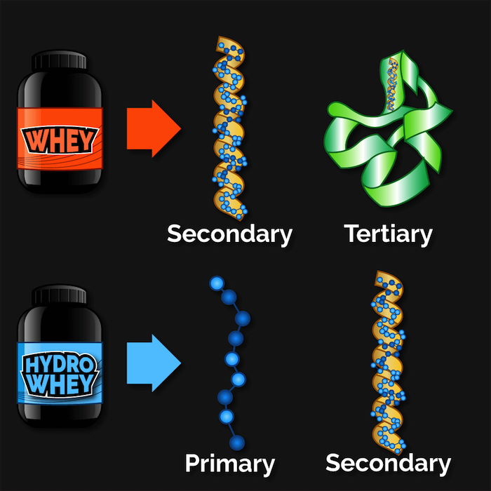 whey-protein-structures