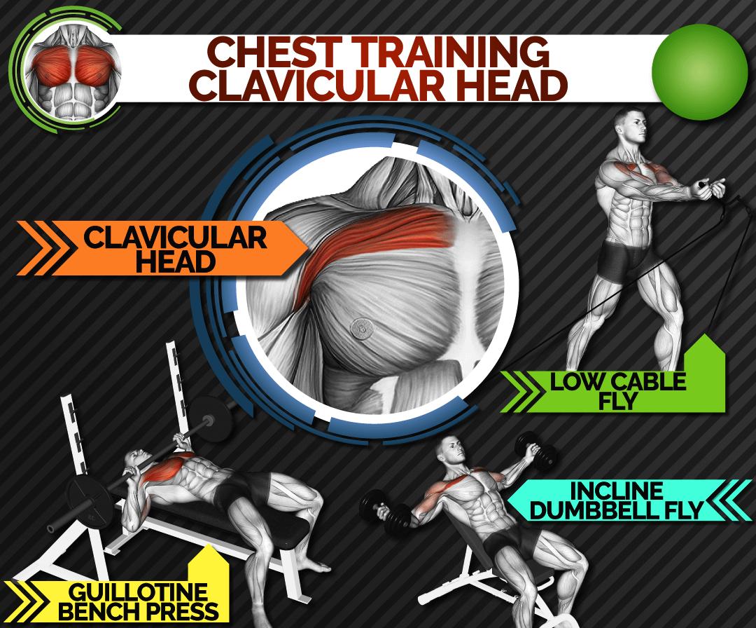 chest-training-clavicular-head