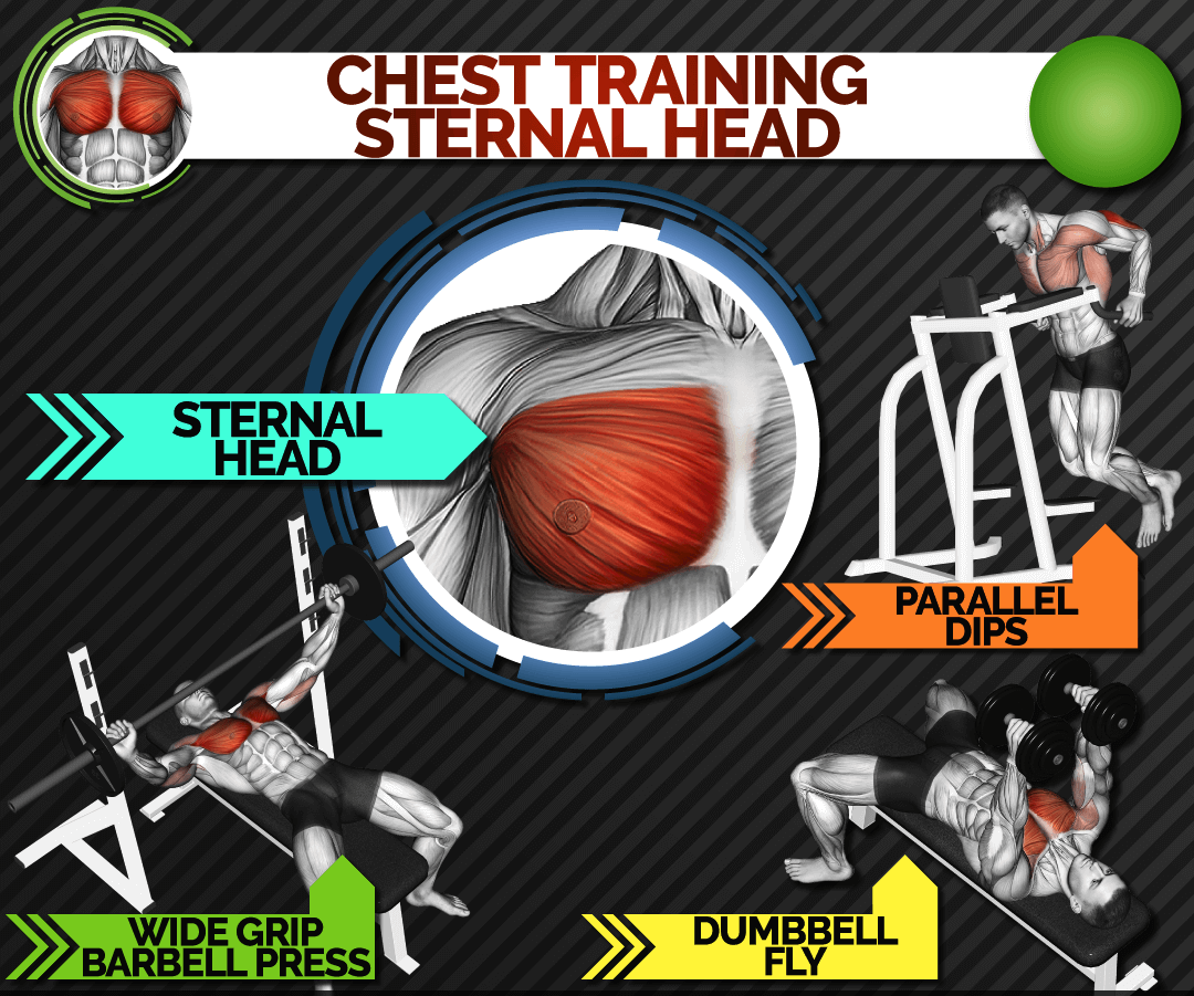 chest-training-sternal head