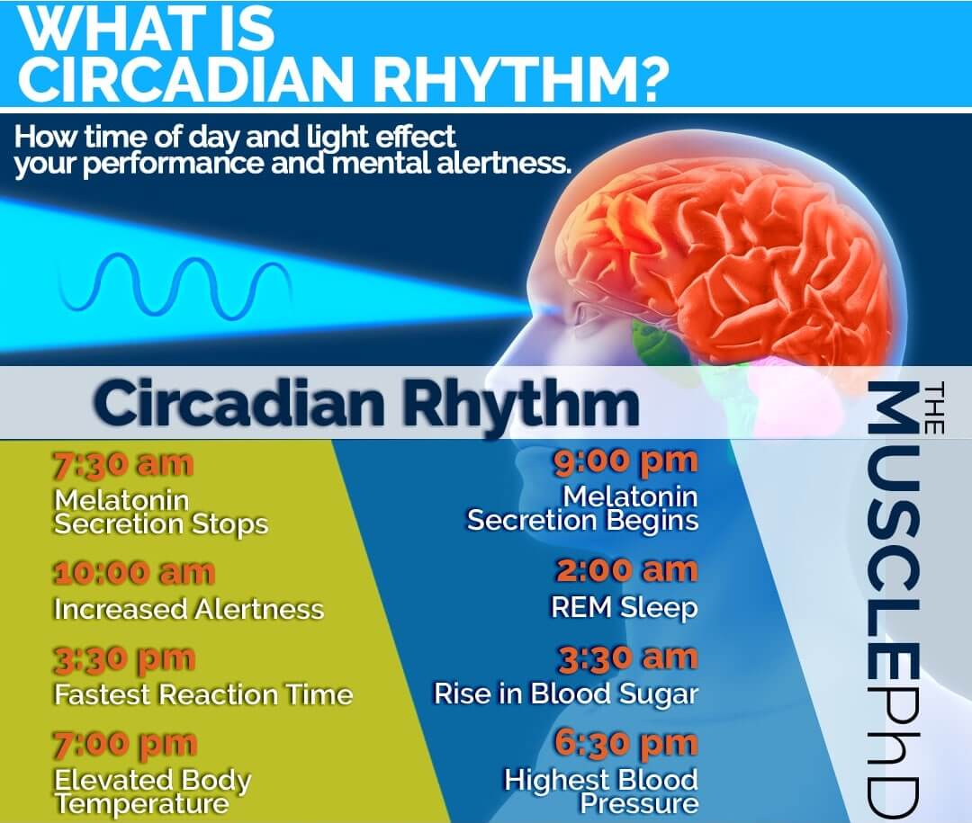 circadian-rhythm-sleep-blue-light
