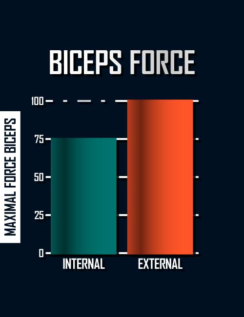 biceps-force