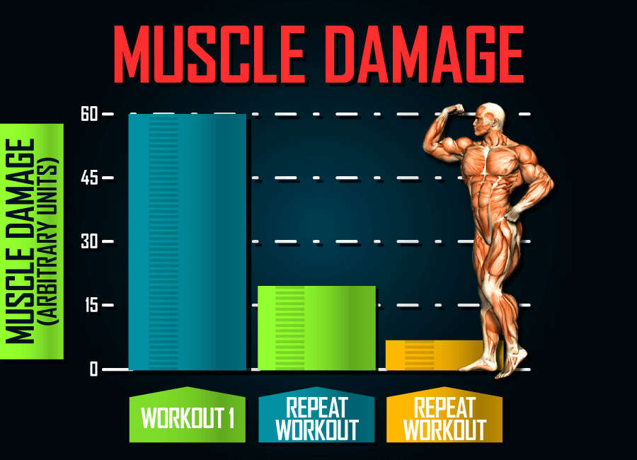 muscle-damage-repeated-bout