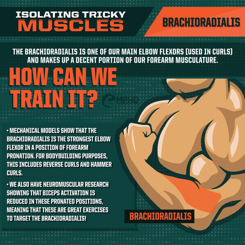 Isolating the Brachioradialis