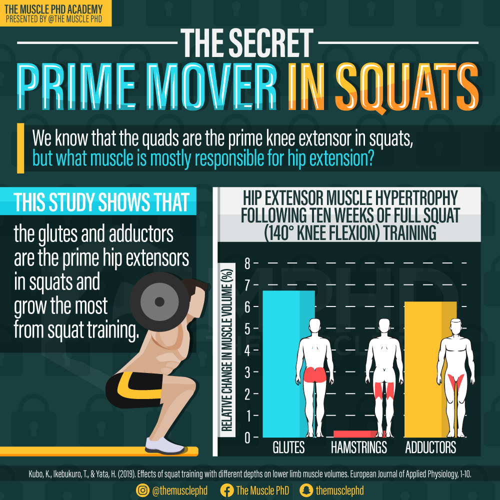 Adductors vs. Hamstrings in the Squat