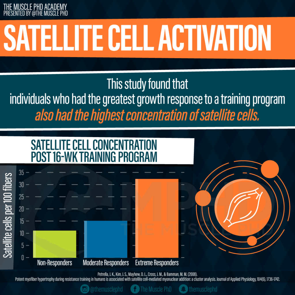 Satellite Cells and Elite Bodybuilders